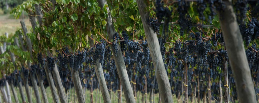 Olasz borok forgalmazója